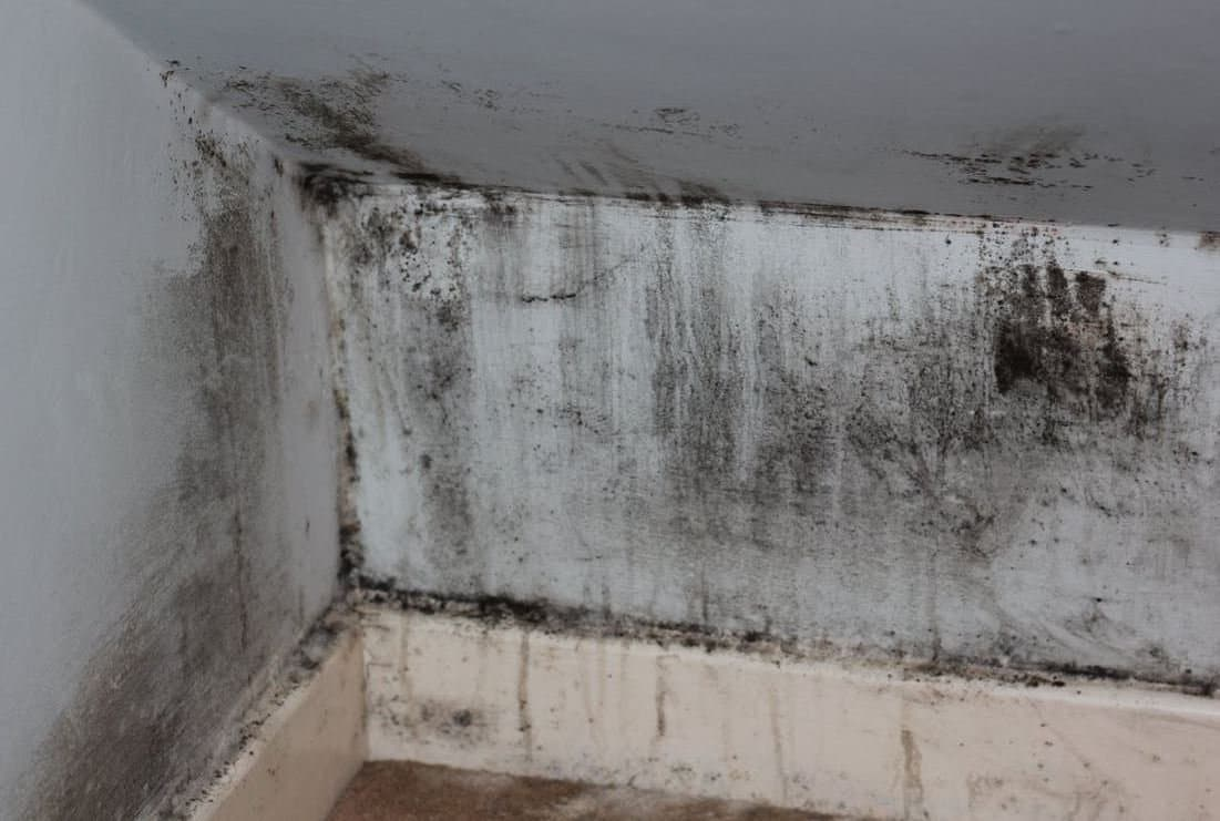 Comment chasser la moisissure dans la maison ?